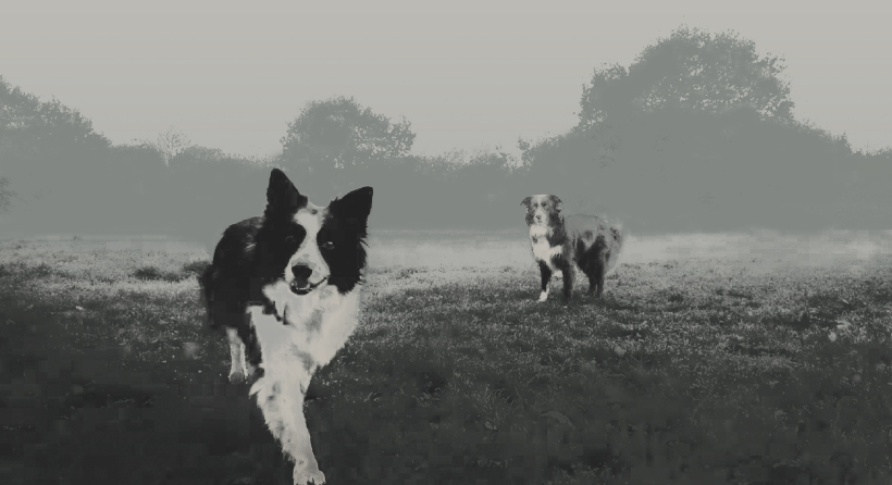 MiddleMarsh_dogs